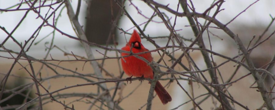 The Sincere Symbolism of Songbirds